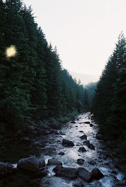 Find images and videos about photography, nature and water on We Heart It - the app to get lost in what you love. Beautiful World, Beautiful Places, Camping Photography, Human Photography, Woods Photography, Adventure Photography, All Nature, Nature Tree, Adventure Is Out There