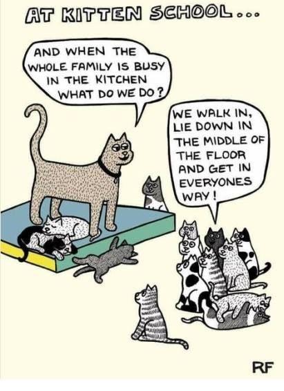 Sunday Funnies Have A Nice Day Mit Bildern Katzen Witze