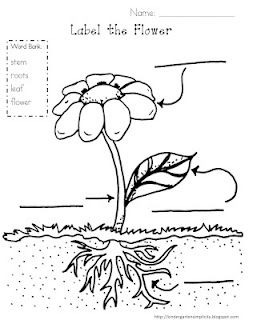 Parts of a Plant via Kindergarten Simplicity