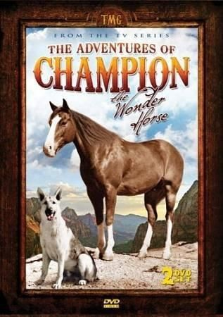 Pin De Clelia Lambir En Horses