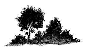 Shrub Bush Tree Png Silhouette Images Silhouette Images Image Hibiscus Shrub
