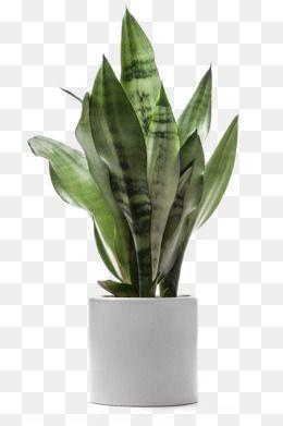 Flat Vector Isometric Indoor Plants Illustrations Plant Illustration Plant Drawing Plants