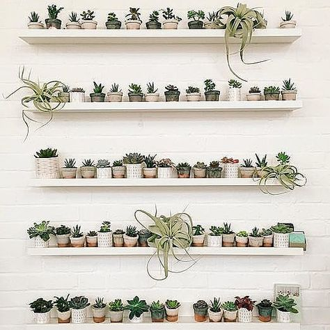 naturalbeauty Envious over this wall of...