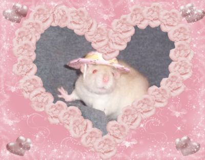 little rat :) Le Vent Se Leve, Cute Rats, Kawaii, Cute Memes, Creepy Cute, Wholesome Memes, Pink Aesthetic, Aesthetic Grunge, Reaction Pictures