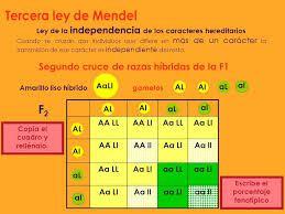 3 ª Ley De Mendel Ley De La Independencia De Los Caracteres Hereditarios En Ocasiones Es Descrita Co Tercera Ley De Mendel Estudiar Biologia Notas De Biología