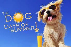 Dog Days Of Summer Google Search Facebook Cover Facebook Cover Images Summer Memes