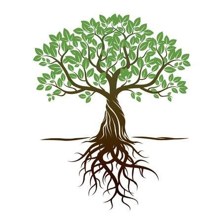 Color Tree Roots And Background Vector Illustration Tree With Roots Drawing Tree Images Roots Drawing