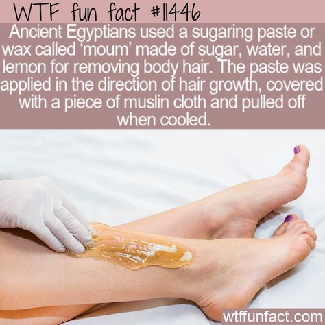 WTF Facts : funny, interesting  weird facts WTF Fun Fact - Body Sugaring #wtf #funfact #wtffunfact 11446 #AncientEgyptians #funnyfacts #Health #History #moum #muslincloth #randomfact #randomfacts #randomfunnyfact #sugaring #wtffunfact