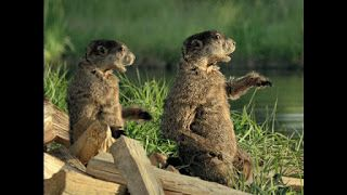 Geico Tv Commercial What Would A Woodchuck Chuck Tv Commercials