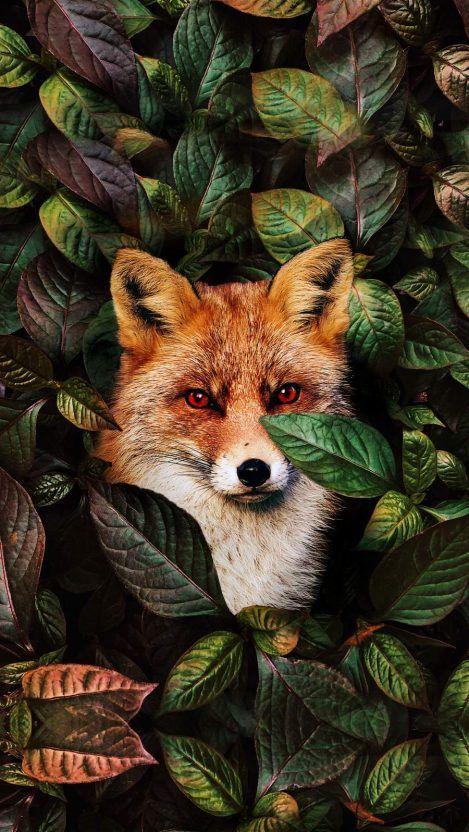 Animal Wallpapers Iphone Wallpapers Animal Wallpaper Wild Animals Photography Animal Photography Wildlife