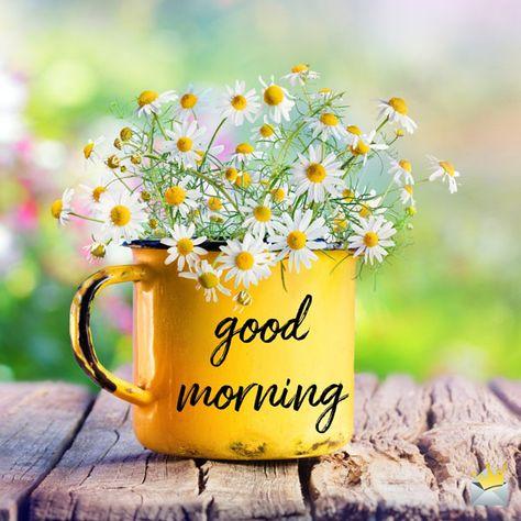 Le #café du matin ça met des fleurs plein la tête! Je vous souhaite une journée lumineuse!