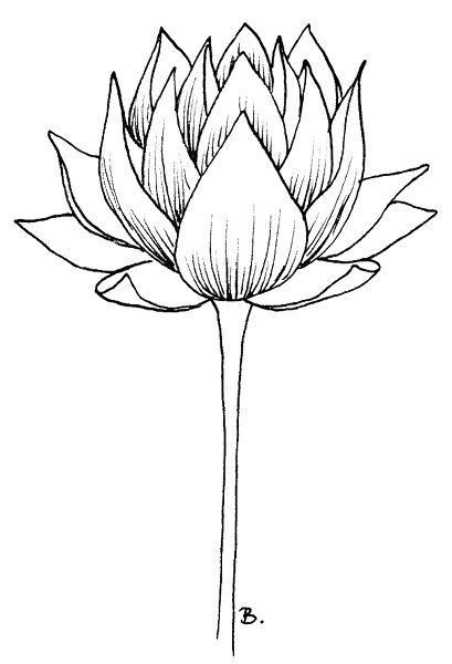 Картинки каменный цветок для срисовки
