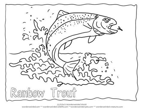 Image Result For Rainbow Trout Drawings Outline Rainbow Trout