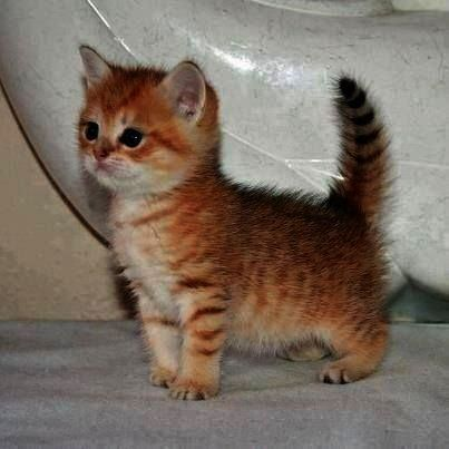 Cats And Kittens Types Cats And Kittens Gumtree Kittens Cutest Cute Cats Baby Animals