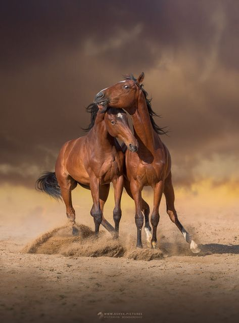 Two foals by Victoriya Bondarenko on 500px