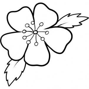 How To Draw A Cherry Blossom Flower Drawing Drawings Cherry Blossom