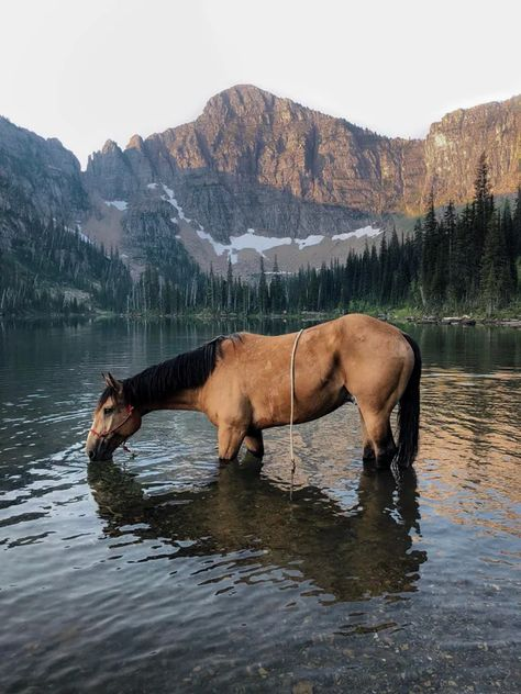 My brother's horse Amigo Joe drinking at sunrise in the mountains of Montana. Pretty Horses, Beautiful Horses, One Word Art, R Dogs, Horse Photography, Wildlife Photography, Horse Girl, Kawaii, The Ranch