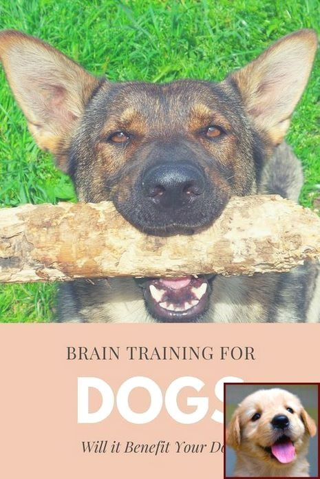 Dog Behavior Turning Back To You And Clicker Training Dogs To Heel