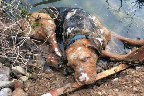 Toter Hund am Rosdorfer Kiessee kein Job für die Polizei