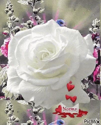 White Rose GIF -