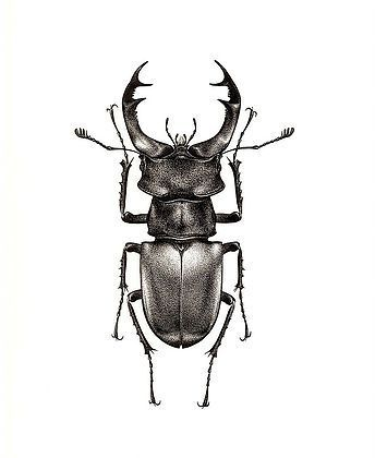 Pin By Frances Mitchell On Stipple Art Insects Beetle Tattoo Insect Art Insects