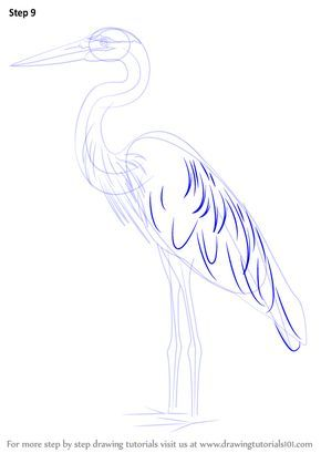 Learn How To Draw A Great Blue Heron Birds Step By Step Drawing Tutorials Como Dibujar Animales Dibujos De Animales Dibujos