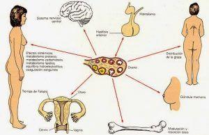 como regular problemas hormonales
