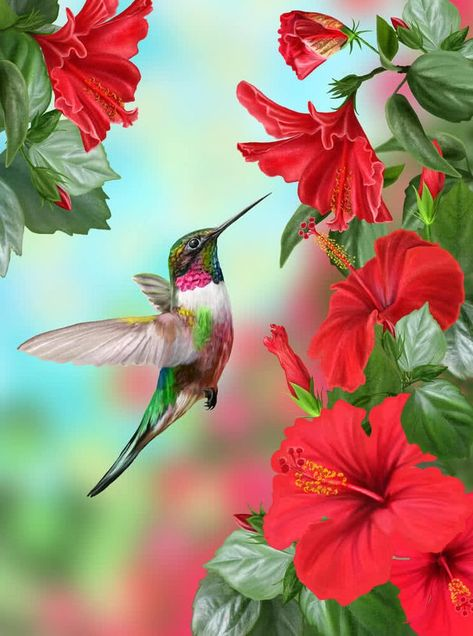 Small bird hummingbird on a background of a blossoming red hibiscus flower.