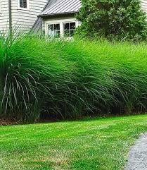 Bildergebnis Fur Sichtschutz Garten Pflanzen Sichtschutzpflanzen Bildergebnis Sichtschutz Pflanzen Winterhart Garten Pflanzen Und Hecke Pflanzen