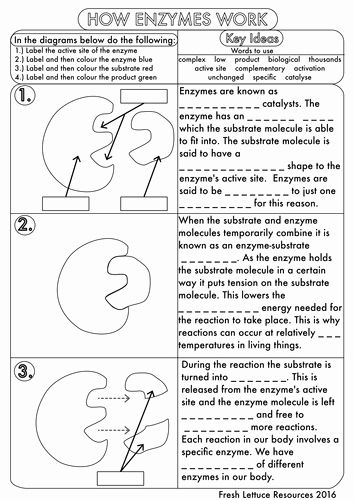 Enzyme Review Worksheet Answers New Gcse Enzyme Worksheet Pack By Beckystoke Uk Teaching Biology Lessons Biology Worksheet Biology Activity Answer key for biology worksheets