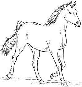 تعليم الرسم للاطفال رسم حصان خطوة بخطوة بالقلم الرصاص بطريقة سهلة وبسيطة Horse Coloring Horse Coloring Pages Horse Drawings