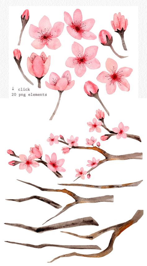 The set of hand drawn watercolor cherry blossom flowers. These illustrations and patterns are suitable for wedding invitation, fabric, packaging, home textile, Cherry Blossom Watercolor, Cherry Blossom Art, Cherry Flower, Abstract Watercolor, Watercolor Illustration, Watercolor Flowers, Watercolor Paintings, Drawing Flowers, Painting Flowers