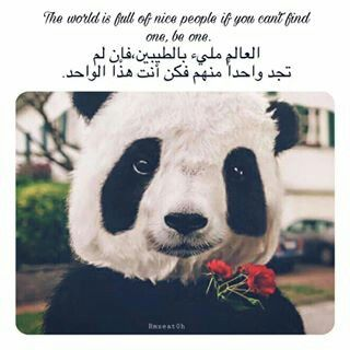 فك ن أنت منـهم Cool Words Arabic Phrases Panda Bear