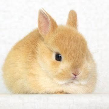 Cute Bunnies おしゃれまとめの人気アイデア Pinterest Momo かわいい動物の赤ちゃん かわいいペット 動物 かわいい