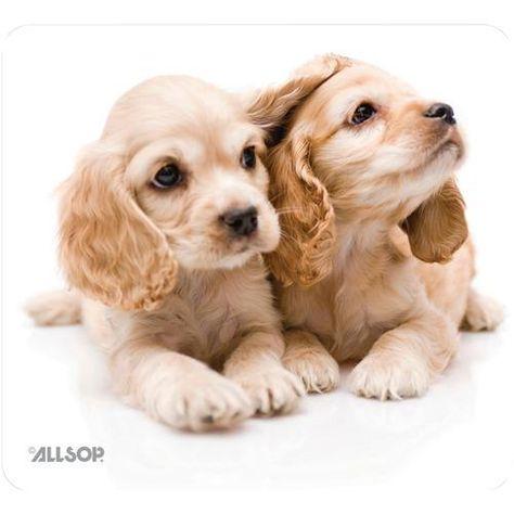 Allsop Naturesmart Mouse Pad Puppies Pack Of 1 Ea Cocker Spaniel Puppies Cute Animals Spaniel Puppies