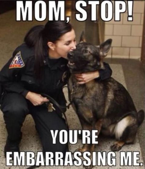 Twenty Saints: Wholesome Service Dogs Memes - World's largest collection of cat memes and other animals Cute Animal Memes, Animal Jokes, Cute Funny Animals, Funny Animal Pictures, Cute Baby Animals, Military Dogs, Police Dogs, Military Working Dogs, Military Service