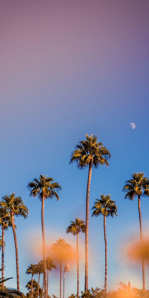 Portrait, palm trees, minimal, sunset, 1080x2160 wallpaper