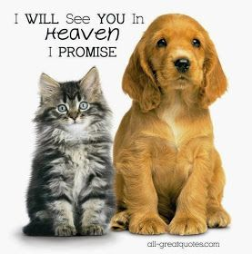 Pet Loss Do Pets Go To Heaven Pet Loss Cute Animals Animals