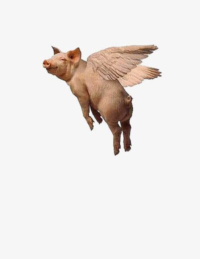 Flying Pig Png Flying Pig Illustration Flying Pigs Art Flying Pig Drawing