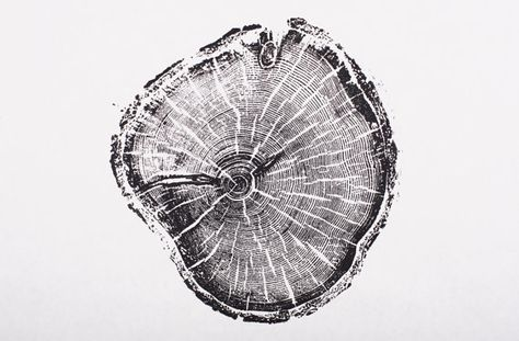 Old Growth Pine. Original Print. 100+ years old pine from Little Cottonwood Canyon. Woodcut print on Etsy, $25.00