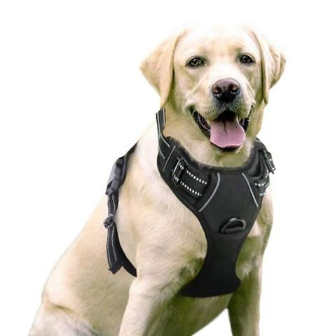 5 No Pull Harnesses For Walking Dogs That Pull Kopek