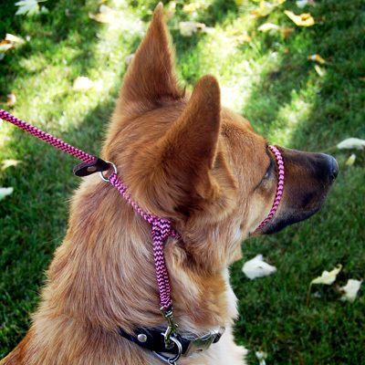 Different Kind Of Head Collar Dog Harness Gentle Leader Dog