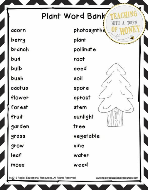 Plant Research Project - Report Writing Templates SecondGradeSquad