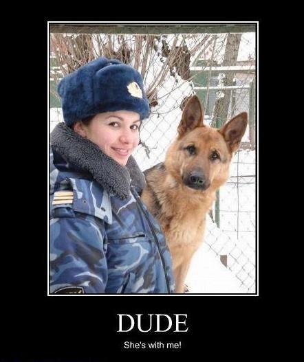 Pin By Kintsugi On Demotivators German Shepherd Memes Military Working Dogs German Shepherd Training