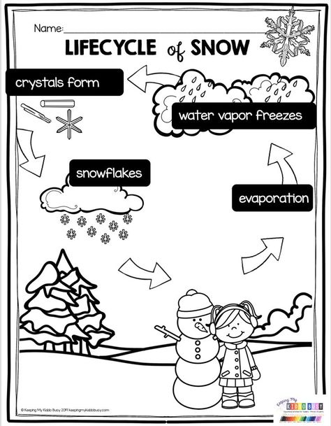 Lifecycle of Snow - all about how snow is made - curious about snow for kindergarten and first grade science - evaporation - water vapor - snowflakes - crystals - print FREE activities - freebie printables to teach all about winter and snow # 1st Grade Science, Preschool Science, Teaching Science, 1st Grade Activities, Science Fun, Science Education, Life Science, Snow Activities, Weather Activities