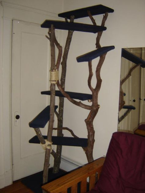 Felis Arborealis -- Gallery    This cat tree was made from sugar maple, red maple and mountain laurel.