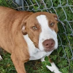 Available Pets At Bay County Animal Control In Panama City