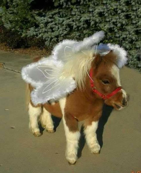 DESPITE the fact that this teeny horse is humiliated that it's weraing faerie wings. It is adorable. <3