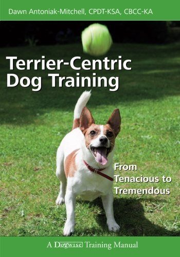 Terrier Centric Dog Training From Tenacious To Tremendous