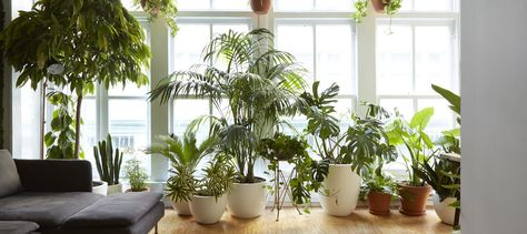 7 Gorgeous Houseplants That Will Purify The Air And Make You